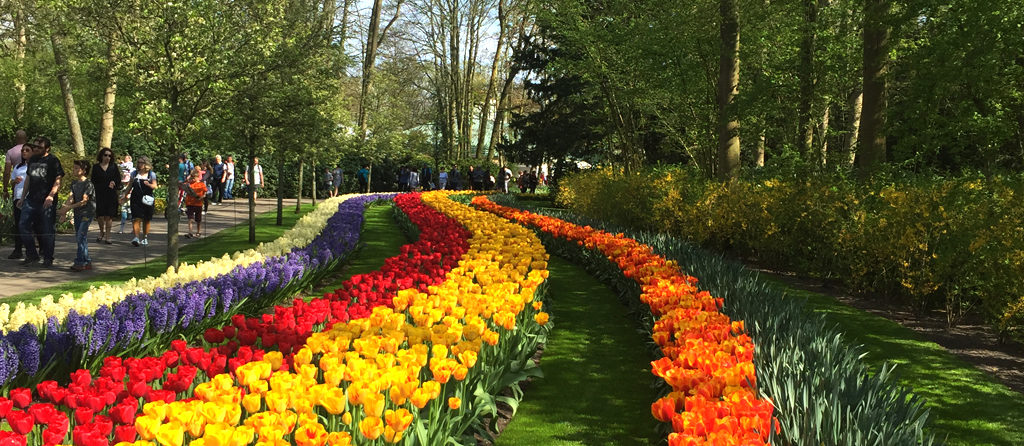 Guided tulip tours Keukenhof Flower Garden with Holland Tours
